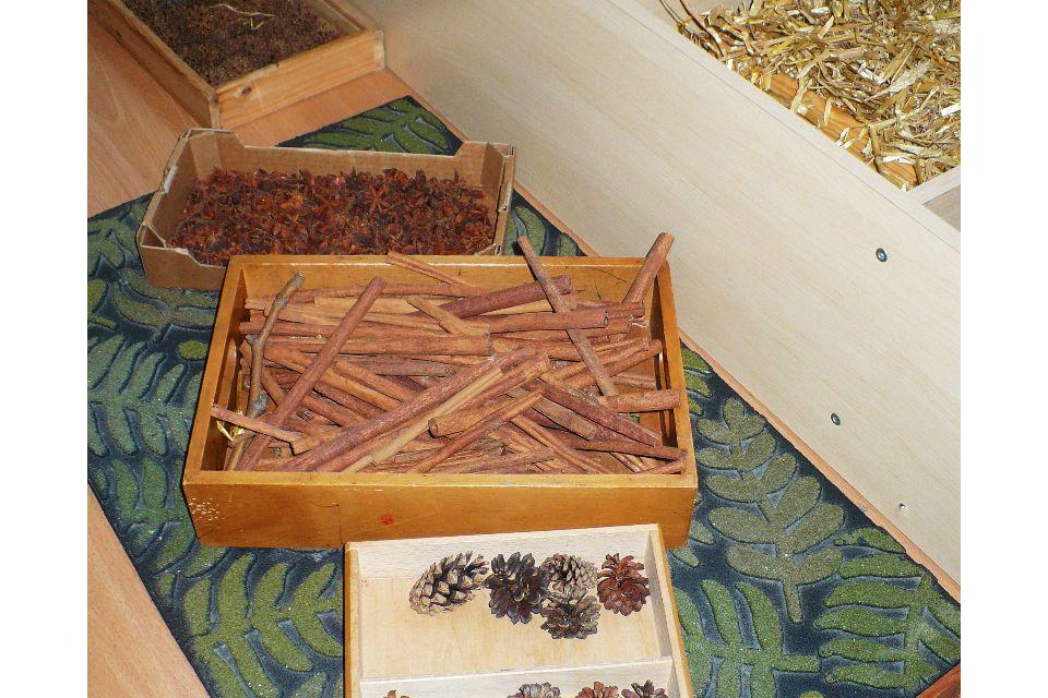 L'odore del legno, il rumore del sasso, la leggerezza del riccio